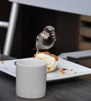 Bird Eating Cupcake